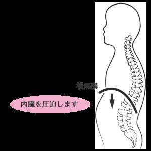 猫背により横隔膜が下がり、内臓を圧迫します